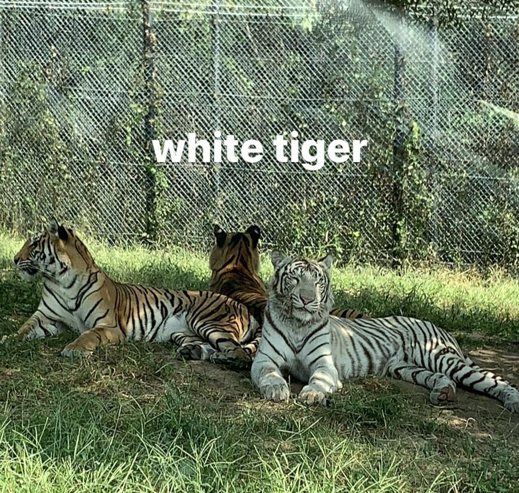 safari park?のアイキャッチ画像